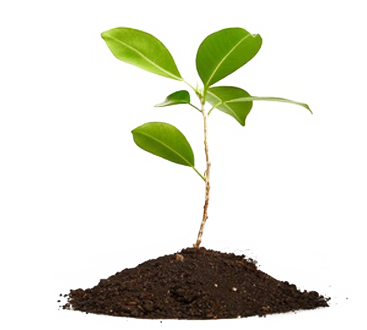 about-plant